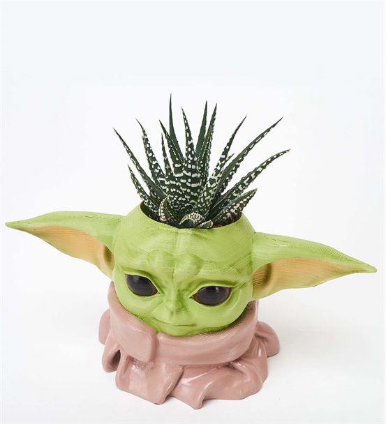 Baby Yoda ve Haworthia Aranjmanı