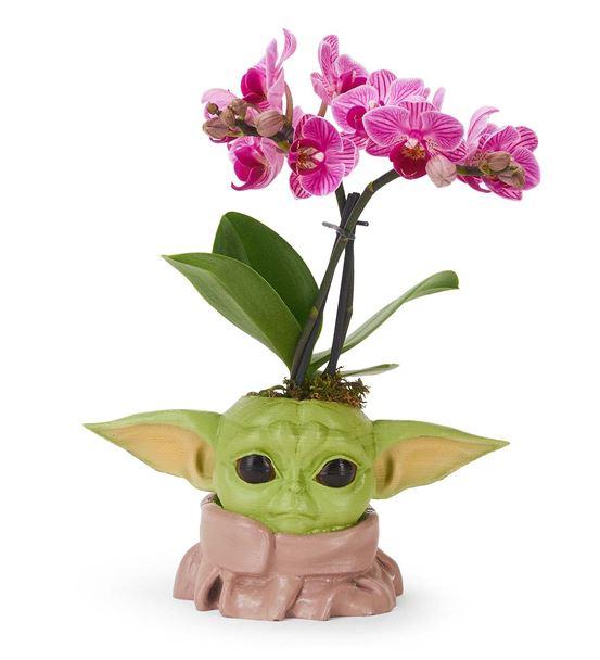 Baby Yoda ve Orkide Aranjmanı