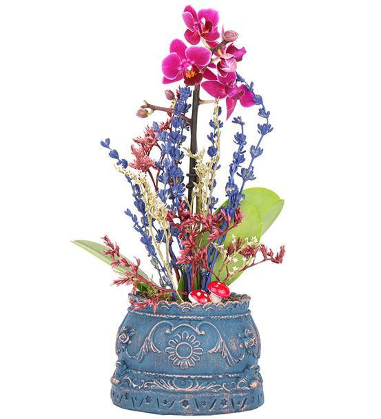 Barok Serisi Tek Dal Mini Orkide Tasarım