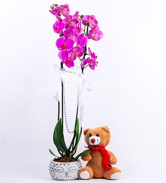 Baykuş Saksıda  Mor Orkide Pelüş Ayı Tasarım