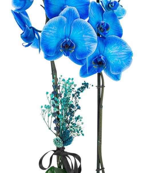 Billet Serisi Mavi Orkide Tasarım-Eskitme