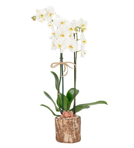 Billet Serisi Orkide Tasarım-Kahve
