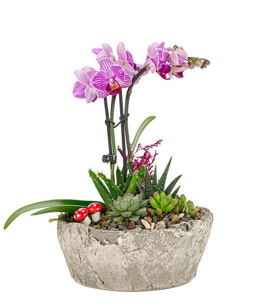 Birch Serisi  Çift Dal Orkide Ve Sukulent Tasarım