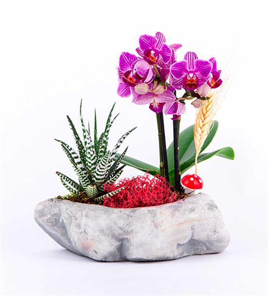 Boat Serisi Taş saksıda Mini Orkide Ve Pelüş Ayı