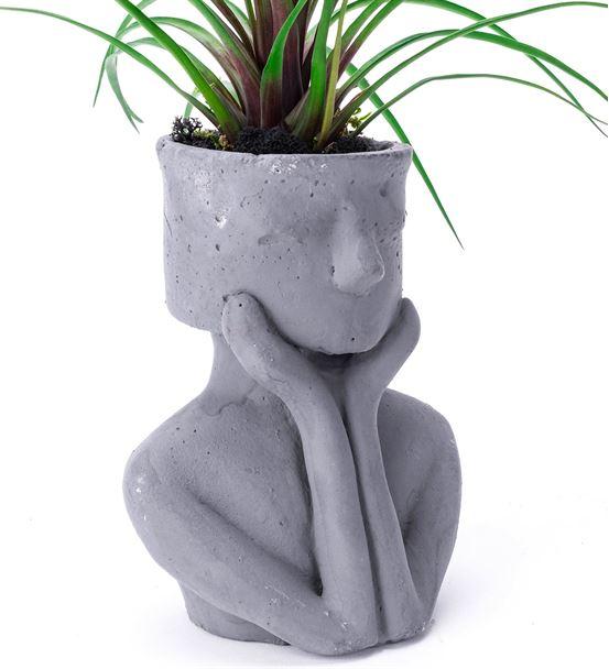 Buddha Saksıda Tillandsia bitkisi