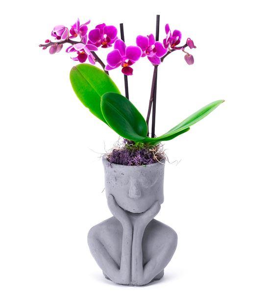 Buddha Taş Saksıda Mini Orkide Arajmanı