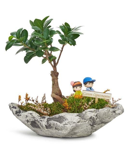 Canım Öğretmenime Bonsai Bahçesi