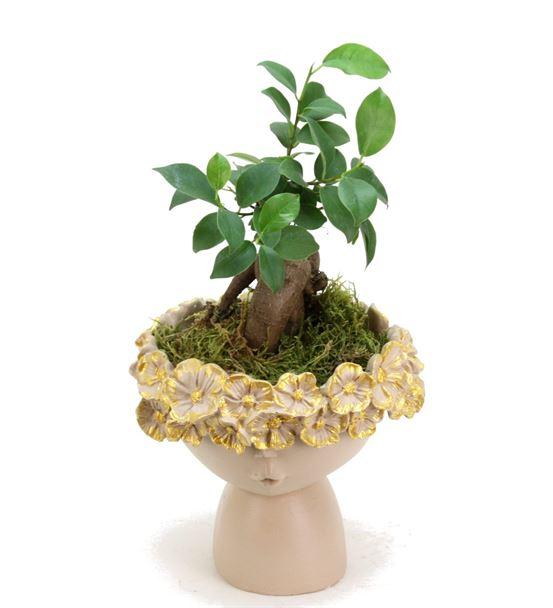 Çiçekli Kız ve Mini Ficus Bonsai