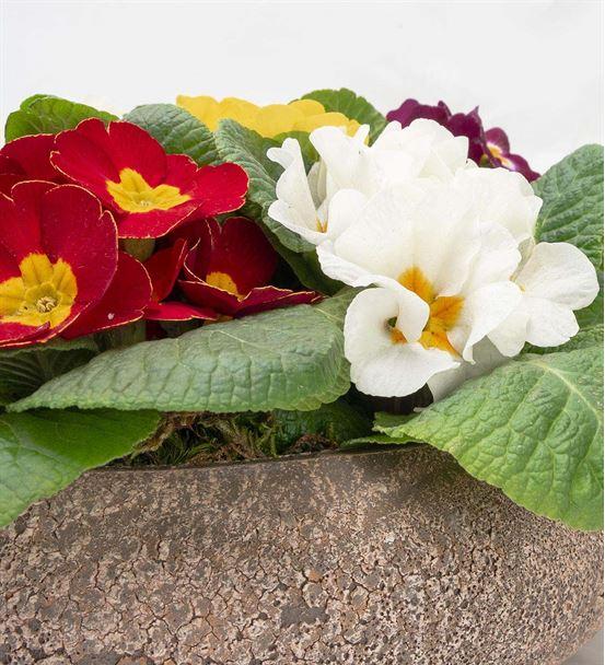 Dekoratif Seramikte Renkli Çuha Saksı Çiçekleri