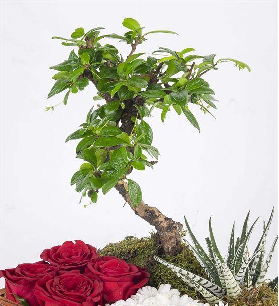 Dekoratif Tahta Kutuda Bonsai Aranjmanı
