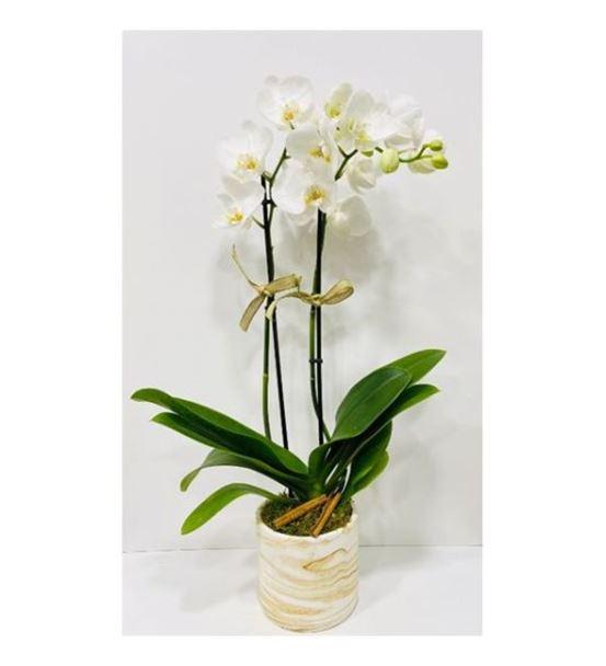 Dekoratif Vazoda Çift Dal Beyaz Orkide