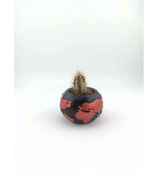 Dünya Saksı Canlı Kaktüs Sukulent Gold-Ebacnl0013