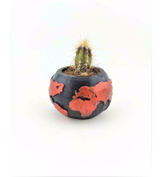 Dünya Saksı Kırmızı Canlı Kaktüs-Ebacnl0030