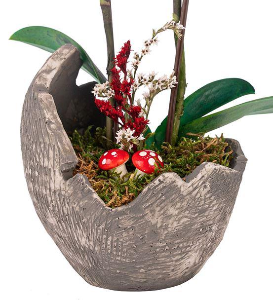 Egg Serisi Mini Orkide Tasarım