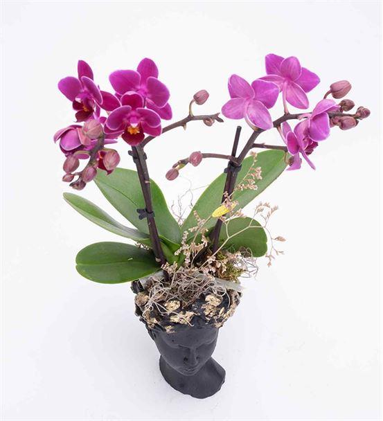 Helen Serisi Çift Dal Mini Orkide