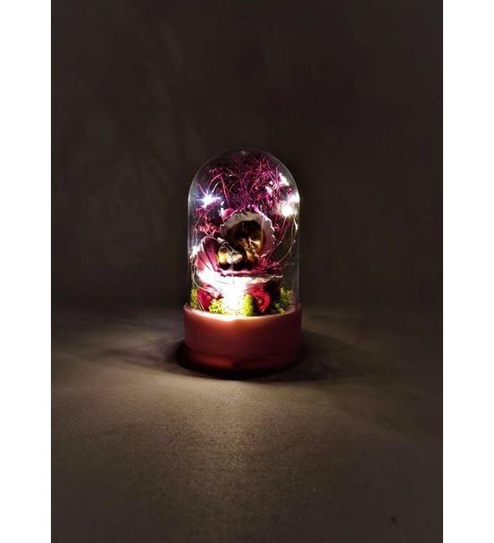 Işıklı Fanus Pusetli Kız Bebek Teraryum-Ebamtf0014