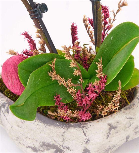 Kapadokya 2 Dal Mini Mor Orkide