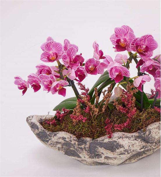 Kapadokya 4 Dal Mini Mor Orkide