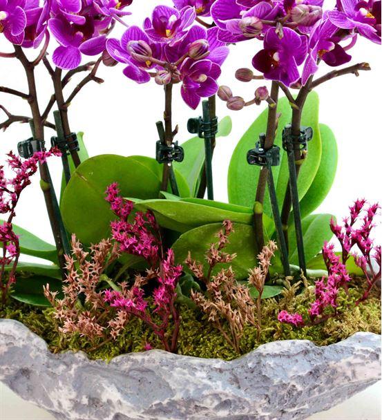 Kapadokya 6 Dal Mini Mor Orkide