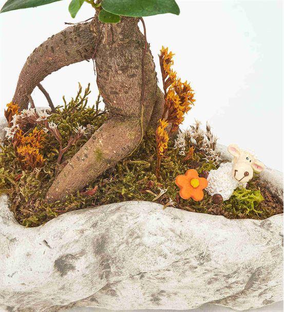 Kapadokya Bonsai Ağacı ve Kuzu