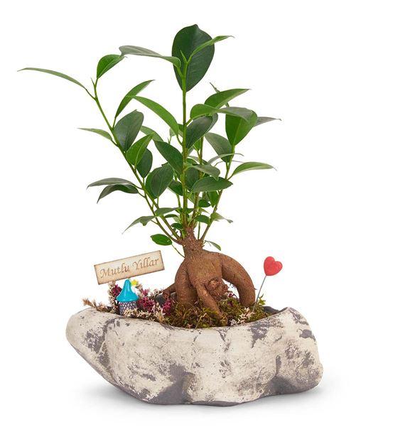 Kapadokya Ficus Bonsai Doğum Günü Çiçeği