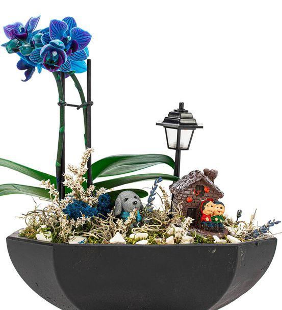 Katrina Mini Mavi Orkide Serisi