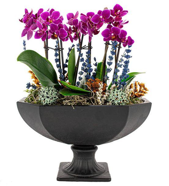 Katrina Mini Mor Orkideler Serisi