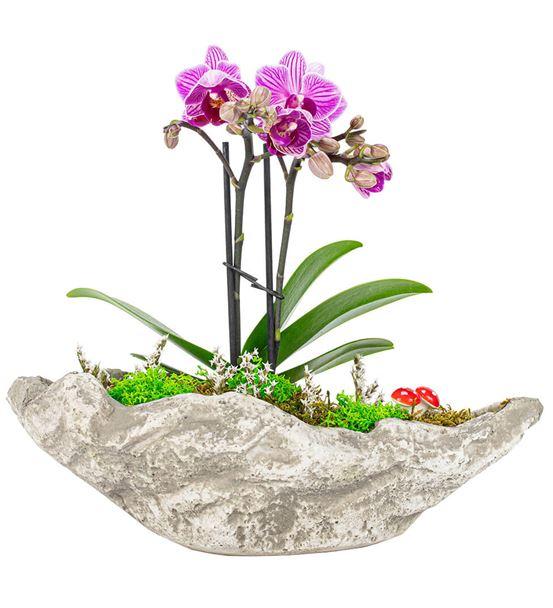 Kaya Serisi Mini Orkide Tasarım