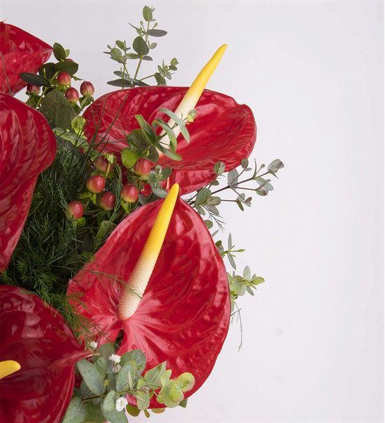Kırmızı Antoryum Bahçesi Aranjmanı