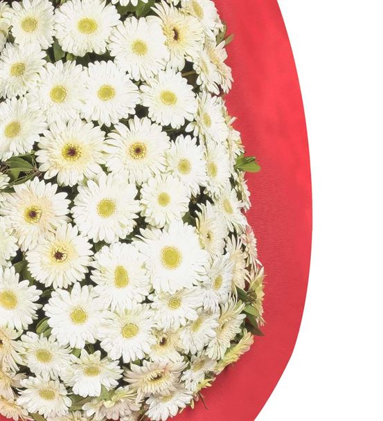 Kırmızı Beyaz Gerbera Kutlama Çelengi