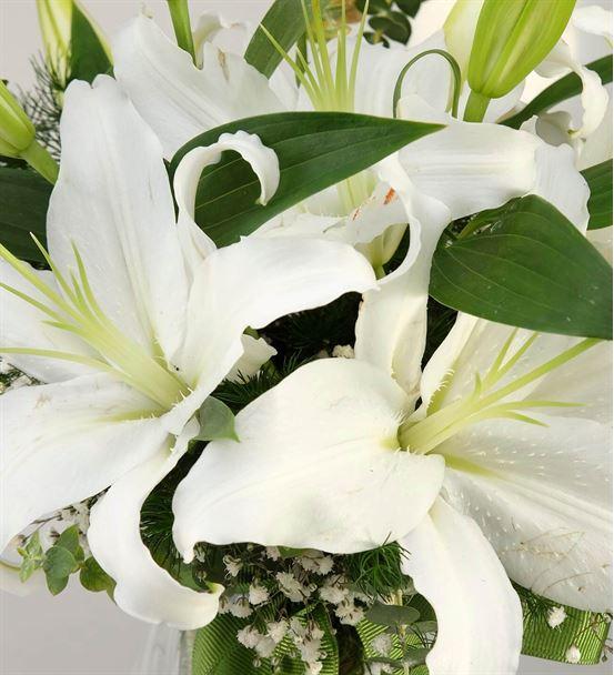 Kokulu Beyaz Lilyum Aranjmanı