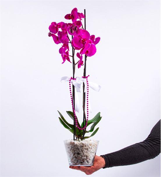 Konik Cam Fanusta Mor Orkide Ve Pelüş Ayı Tasarım