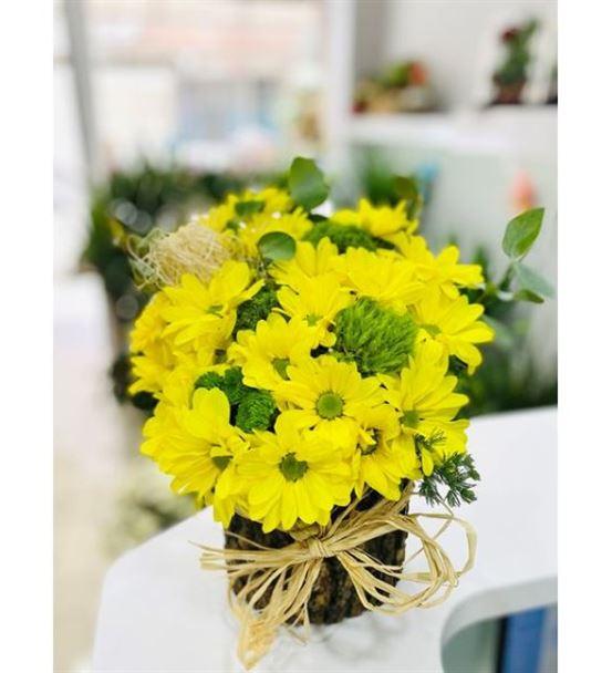 Kütükte Sarı Papatya
