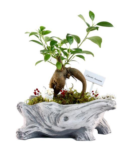 L'arbre Canım Annem - Mini Bonsai
