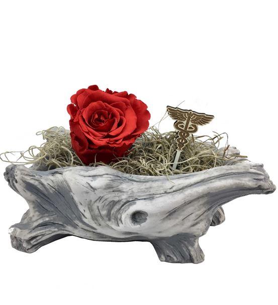L'arbre Doktor - Solmayan Gül Kırmızı