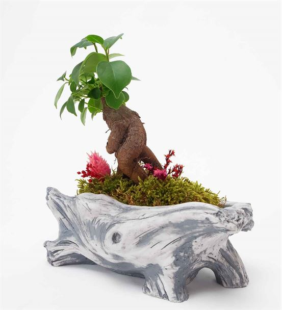 L'arbre Mini Bonsai