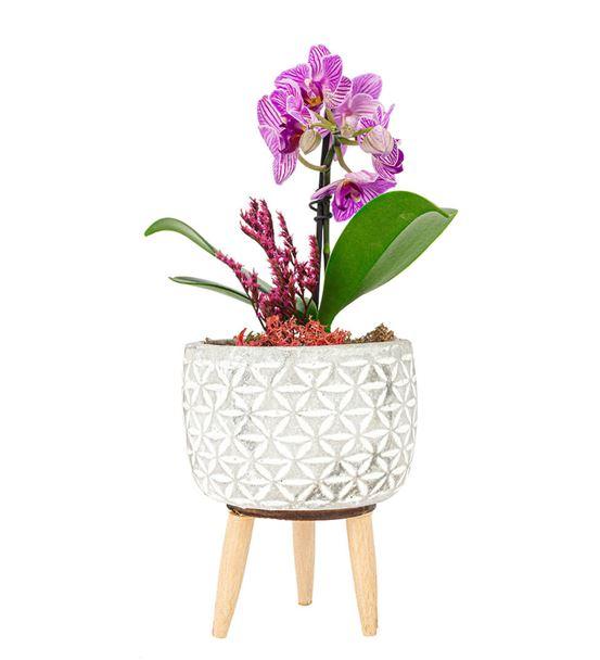 Legs Serisi Tek Dal Mini Orkide Tasarım