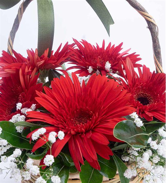 Masal Perisi 5 Kırmızı Gerbera Çiçek Sepeti