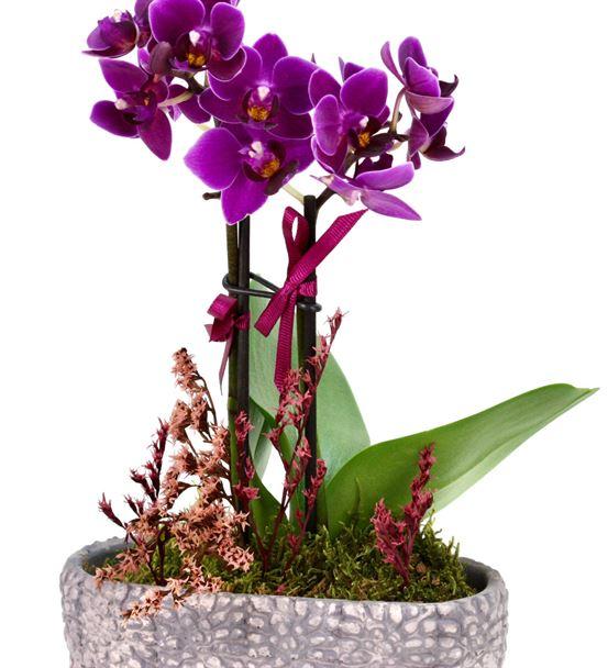 Mini Orkide