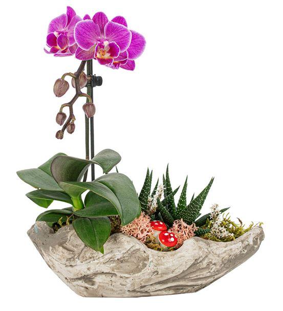 Mini Rock Serisi Mini Orkide Ve Haworthia Tasarım
