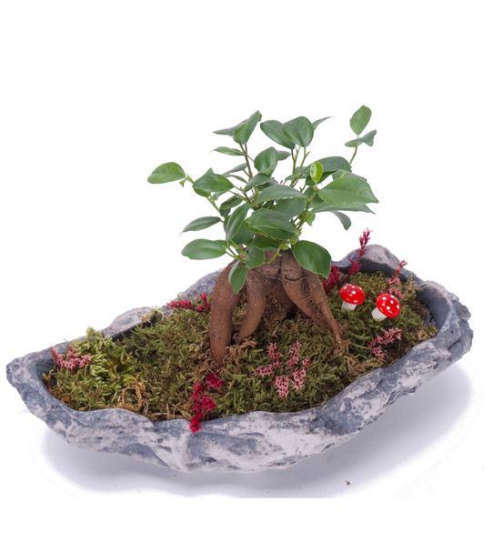 Minyatür Bahçem Mini Bonsai