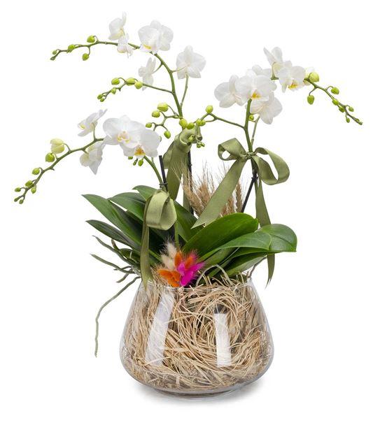 Özel Tasarım Vazoda 3 Dal Beyaz Saksı Orkide