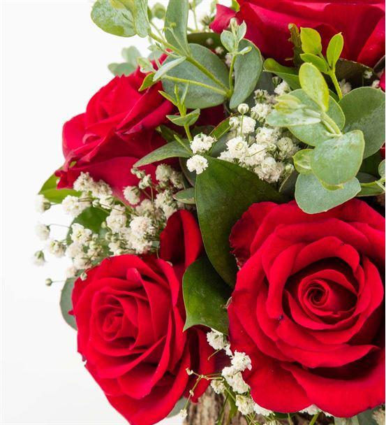 Perpignan 9 Kırmızı Güller