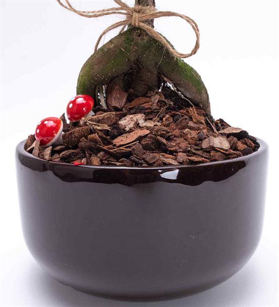 Premium Vazoda Saksı Mini Bonsai Aranjmanı
