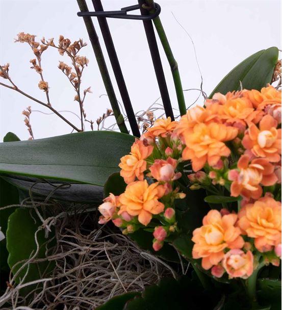 Renk Cümbüşü Mor Orkide Aranjmanı
