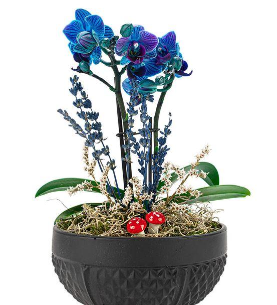 Rita Serisi Mini Mavi Orkide Serisi
