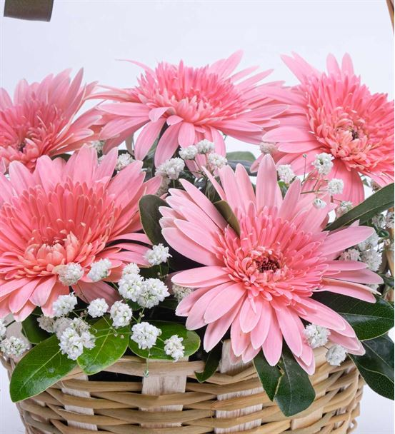 Sempatik Aşk 5 Pembe Gerbera Çiçek Sepeti