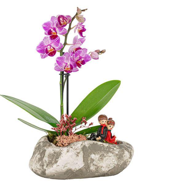 Stone Serisi Çift Dal Mini Orkide Tasarım