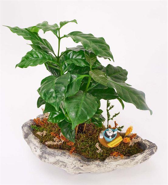 Stone Serisi Tasarım Kahve Çiçeği