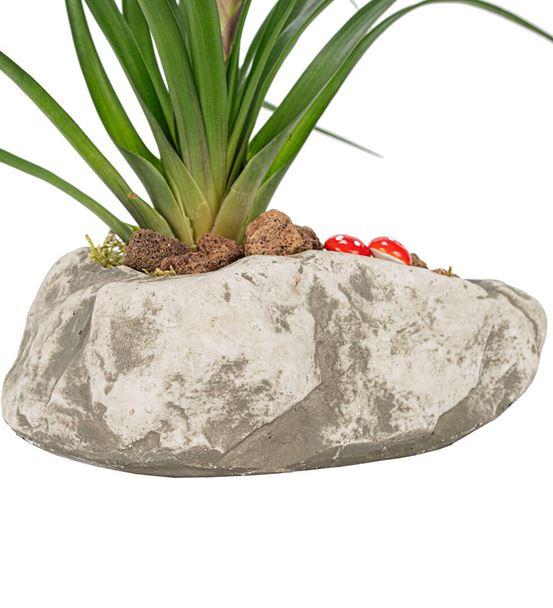 Stone Serisi Tillandsia Tasarım